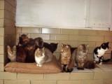 Приютські коти, квітень-травень 2008 р.
