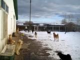 Приютські собаки, лютий-квітень 2008 р.