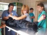 Продовження кастрації приютських тварин