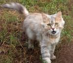 Тварини притулку, вересень 2010 р.