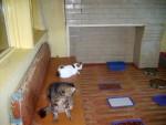 Кішки капризують з їжею не тому, що перегодовані – вони нездужають