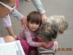 Виставка собак 2 серпня 2009 р.
